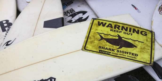 La préfecture de la Réunion a annoncé le lancement d'une opération de pêche d'une vingtaine de requins.