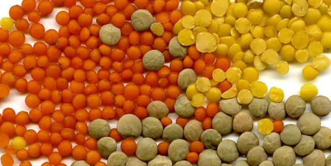 Les légumineuses, comme les lentilles, sont une importante source de fibres.
