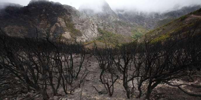 Des arbres brûlés après le passage du feu dans le parc national de Garajonay, le 7 août aux Canaries.