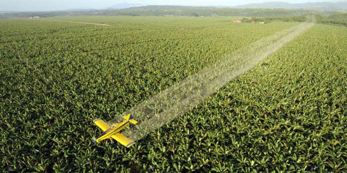 Un avion largue du fongicide sur une plantation de bananes, ici aux Philippines.