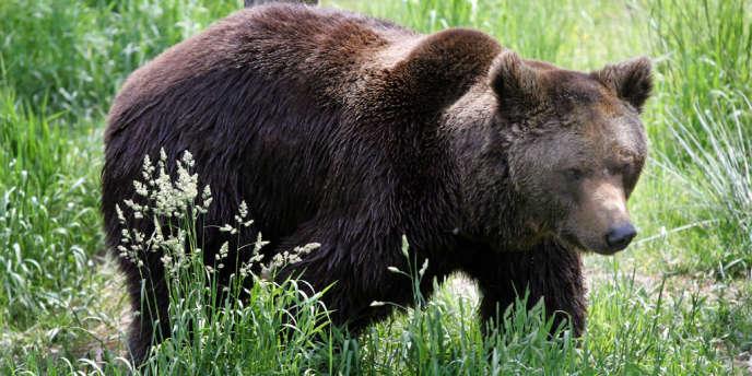 Un ours dans le parc animalier des Angles, en 2006.