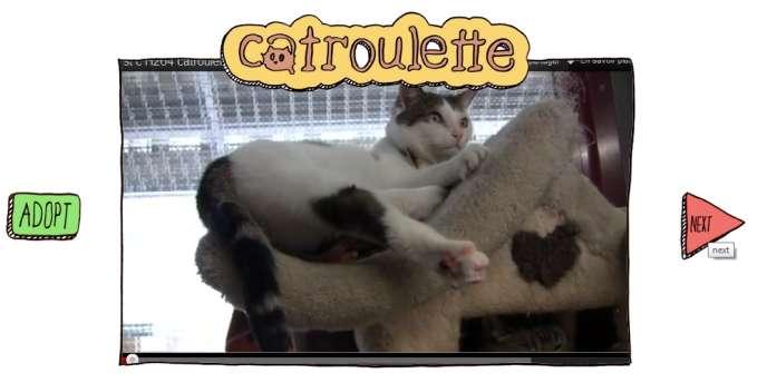 Sur le site belge Catroulette, des centaines de chats abandonnés durant l'été attendent leurs nouveaux maîtres.