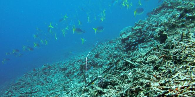 Des cyclones tropicaux ont fortement endommagé certaines parties de la Grande Barrière de corail.