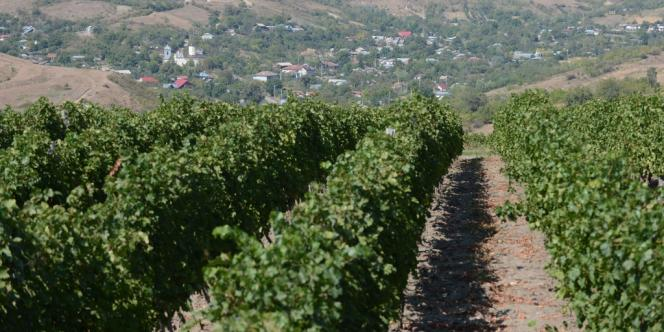 Vue des vignes de Lacerta, à Dealu Mare.
