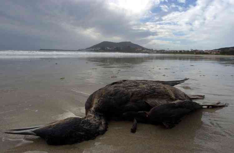 (FILES) This file picture dated November 22, 2002 shows a dead bird covered with oil on Langosteria beach, near Finisterre cap after the sinking of the Prestige petrol tanker. Seamen will go on trial on October 16, 2012 over the sinking of the Prestige petrol tanker which spilt a devastating oil slick when it sank off Spain in 2002, with hundreds of plaintiffs seeking billions in damages. Authorities have set up a court in an exhibition centre for the huge trial in the northern city of A Coruna, which environmentalists say does not go far enough in seeking justice for Spain's worst oil slick and preventing such a disaster occurring again.  AFP PHOTO / CHRISTOPHE SIMON
