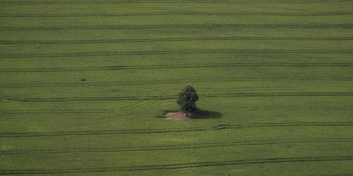 A partir du 1er janvier, les agriculteurs devront consacrer 4 % de leurs terrains au maintien d'éléments fixes du paysage.