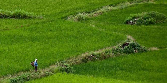 Le Bhoutan est peuplé de 700 000 habitants, dont deux tiers dépendent de l'agriculture dans les villages éparpillés dans les plaines fertiles du sud, les montagnes reculées ou les vallées encaissées du nord du pays.
