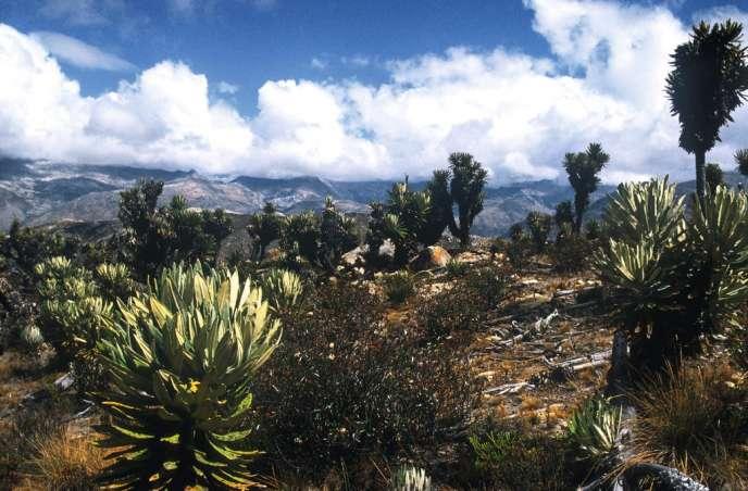 Les chemins  tortueux de la Sierra Nevada  de Santa Marta  traversent des villages indiens comme celui  de Mutanzhi  (à droite). -