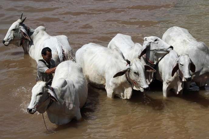 A Phnom Penh, le 7 novembre. Le projet de construction du barrage de Xayaburi, dans le nord du Laos, inquiète les pays voisins et les écologistes, qui redoutent l'impact de l'ouvrage sur l'habitat, la pêche et l'agriculture.