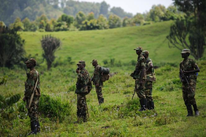 Des rebelles du M23 sur les collines de Kanyarucinya, à proximité de Goma, le 19 novembre 2012.
