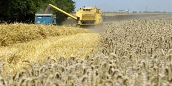 Le revenu annuel moyen des agriculteurs s'établit à 29 400 euros en 2013. Une baisse de 18,7 % qui s'explique d'abord par le repli du secteur céréalier, où le revenu annuel moyen plonge de 50 %, à 24 200 euros.