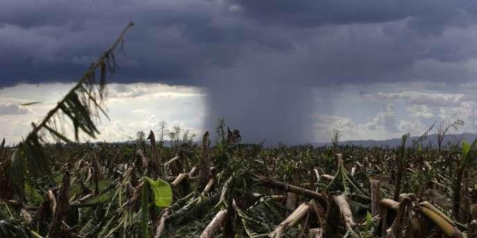 Le typhon Bopha a ravagé les Philippines.