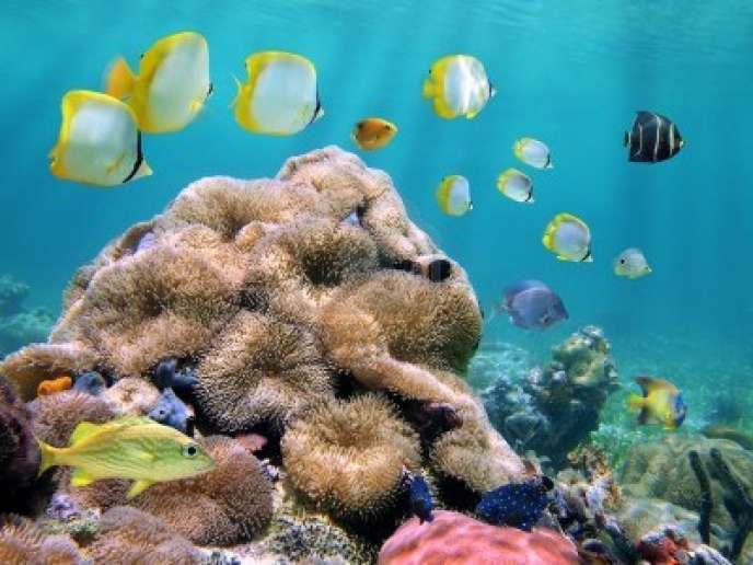 Coraux autour des îles d'Hawaï.