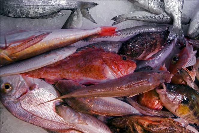 Les poissons de roches qui entrent traditionnellement dans la composition de la bouillabaisse de Marseille.