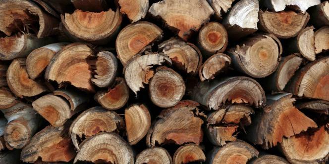 Du bois et des
