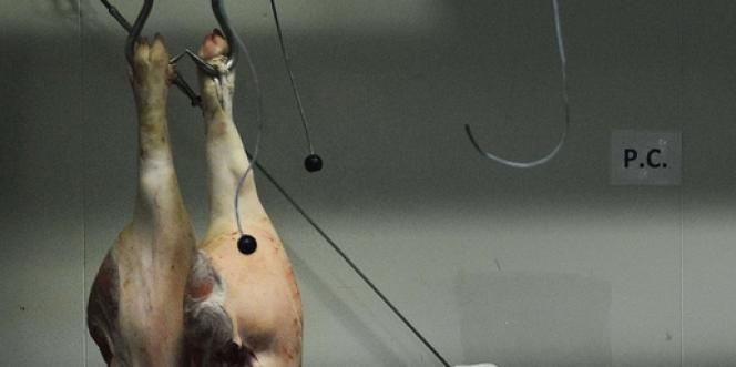Les difficultés de GAD SAS illustrent tout à la fois la crise de la filière porcine et les limites du modèle agricole breton.
