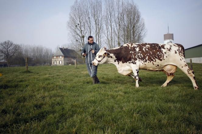 A la montée des coûts de production s'ajoutent, pour les éleveurs laitiers, les incertitudes liées à la fin des quotas, programmée en Europe fin 2015.