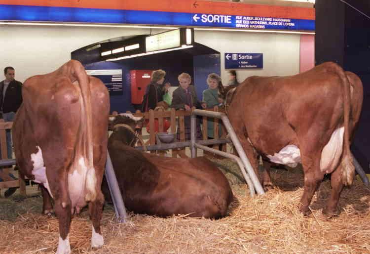 """des vaches de race tarine sont installées, le 18 février, dans la salle d'échange au sous-sol de la gare RER Auber à Paris, où la RATP propose en avant-première du Salon de l'Agriculture, une véritable """"ferme des Alpes"""" avec vaches, brebis, poules, poussins et lapins et rencontre avec les jeunes  agriculteurs des Hautes-Alpes, de l'Isère et de la Haute-Savoie."""
