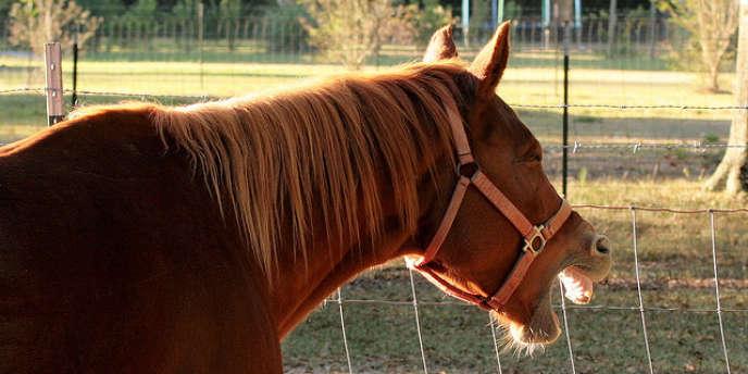 L'association les Écuries de la blanche, à Bailleul, permet à des jeunes de surmonter leurs difficultés grâce à la pratique de l'équitation.