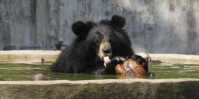 Un ours noir dans un centre animalier de la province de Chonburi, en Thaïlande, le 20 février.