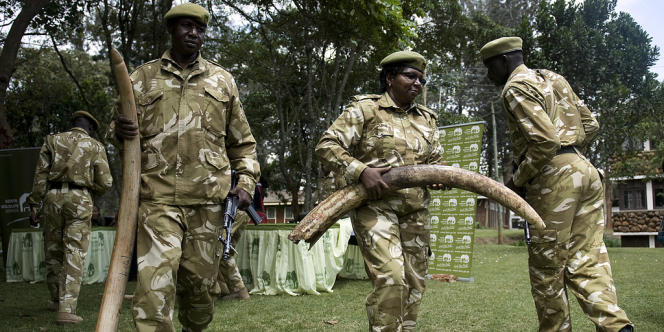 Des officiers kényans portent des défenses d'éléphants saisies à des braconniers dans les zones de protection du Kenya et aux alentours, en juin 2012 à Nairobi.