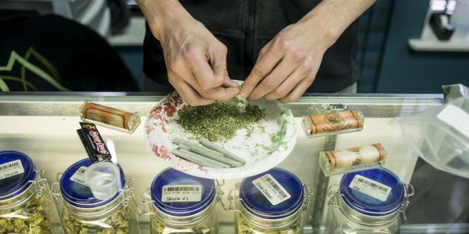 Un  homme roule un joint au dispensaire Medicine Man de Denver, Colorado.