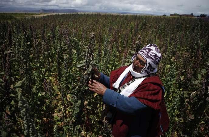 Geronimo Blanco au milieu de ses plans de quinoa, à Patamanta (Bolivie), le 16 février 2013.