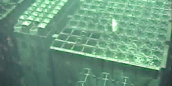 D'après Tepco, la température y monte en moyenne de 0,3 à 0,4 degré par heure depuis la coupure du système de refroidissement, ce qui laisse à l'opérateur environ quatre jours pour rétablir le courant avant que ne soit atteinte la limite de sûreté, fixée à 65 degrés Celsius.