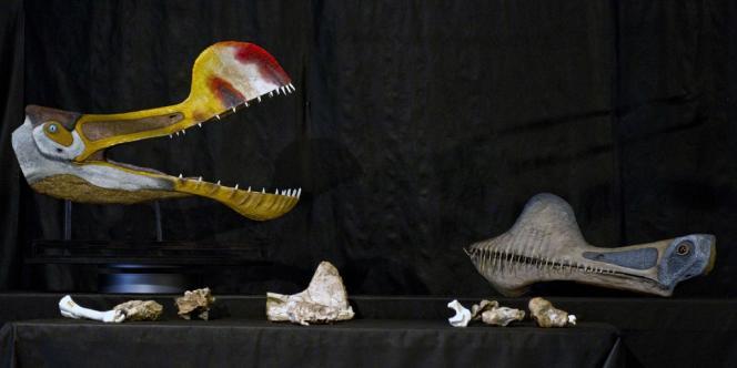 Une reconstitution de la tête en vie du ptérosaure.
