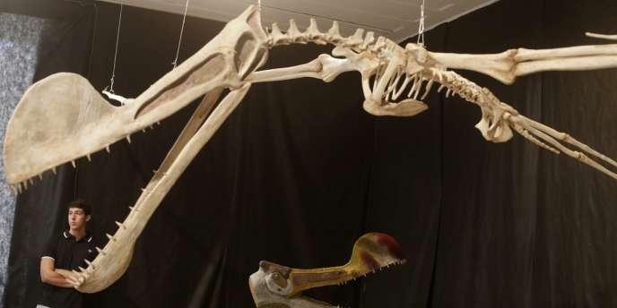Le spécimen, de 8,2 mètres d'envergure, a été attribué à l'espèce