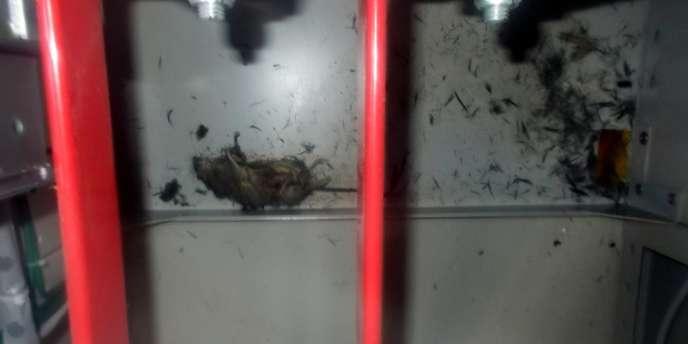 Tepco a diffusé des photos montrant un rat qui pourrait être à l'origine de la panne dans la centrale nucléaire de Fukushima.