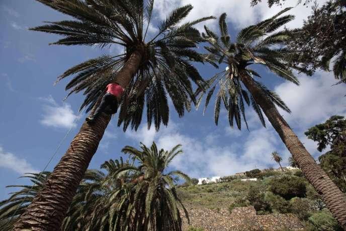 L'île de la Gomera aux Canaries.