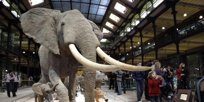 La galerie de l'évolution au Muséum d'Histoire naturelle, à Paris, le 5 février 2010.