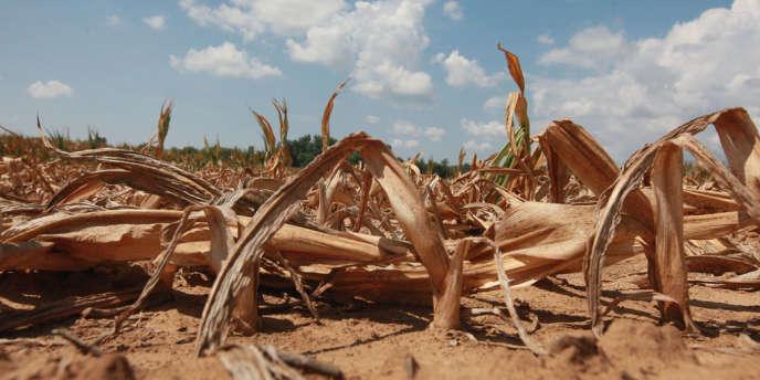 L'année 2012 avait été la plus sèche ainsi que la plus chaude aux Etats-Unis depuis 1895.