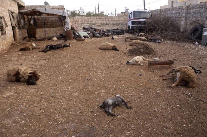 Des carcasses d'animaux gisent sur le sol, à Alep, le 23 mars, après ce que les habitants de la zone ont décrit comme une attaque à l'arme chimique.