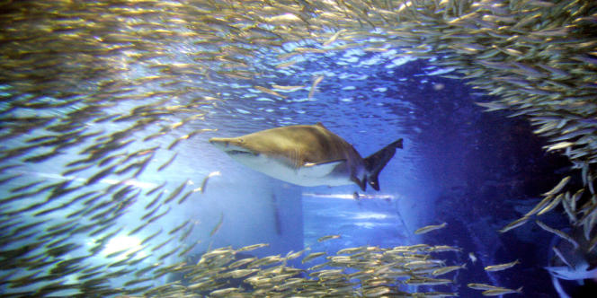 La Nouvelle-Calédonie a décidé d'interdire la pêche au requin dans l'ensemble de sa zone économique exclusive.