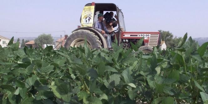 Destruction de plants de soja transgénique, sous le contrôle des agriculteurs de la confédération paysanne, à Charleval en 2000.