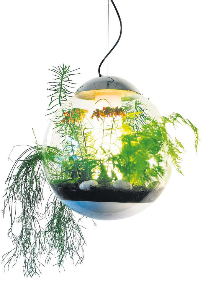 Petit paysage en suspension dans un lustre.
