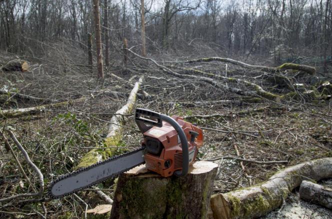 Le bois de Tronçay, dans la Nièvre, où la société Erscia prévoit d'implanter une scierie et un incinérateur produisant de l'électricité. Des militants écologistes s'opposent à son défrichement.