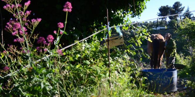 Laetitia Barriera, jeune agricultrice sur les hauteurs de la plaine du Var, dans son jardin.