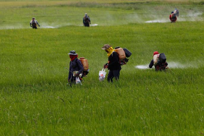 En dépit des dénégations des industriels du secteur, les pesticides sont bel et bien impliqués dans un grand nombre de pathologies lourdes.
