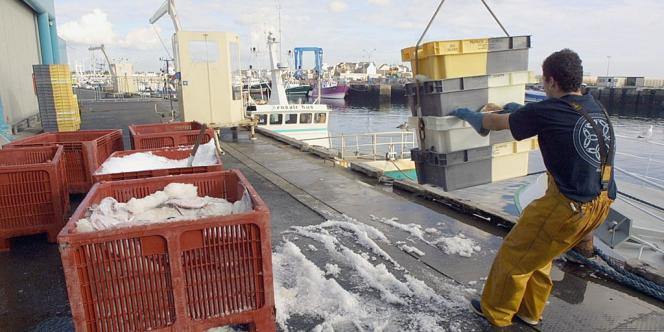 Le déchargement d'un chalutier, dans le port du Guilvinec, en Bretagne.