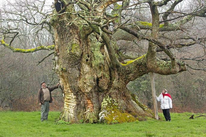 Le chêne de Saint-Civran (Centre).