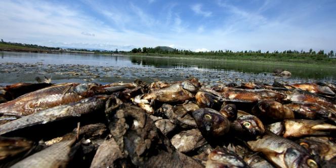 Au moins 500 tonnes de poissons morts ont été trouvés dans les eaux du barrage Hurtado, au Mexique.