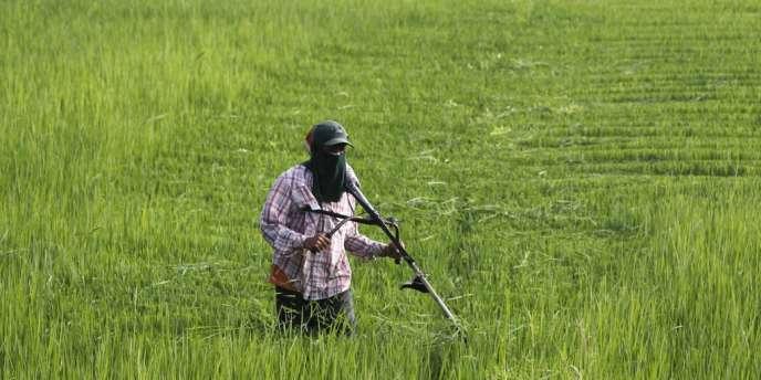 Le gouvernement de Yingluck Shinawatra avait décidé fin 2011 d'acheter le riz aux paysans à un prix 50 % plus élevé que les cours mondiaux afin d'augmenter leurs revenus, respectant ainsi une promesse électorale.