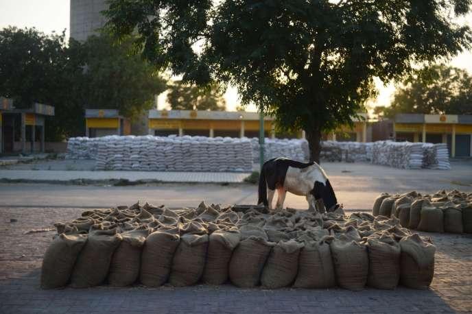 Des sacs de blé stockés près d'Amritsar, au Pendjab, dans le nord-ouest de l'Inde.