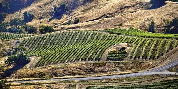 Alexander Valley est l'une des douze appellations qui composent  la Sonoma Valley. Photo: Matthieu Garçon