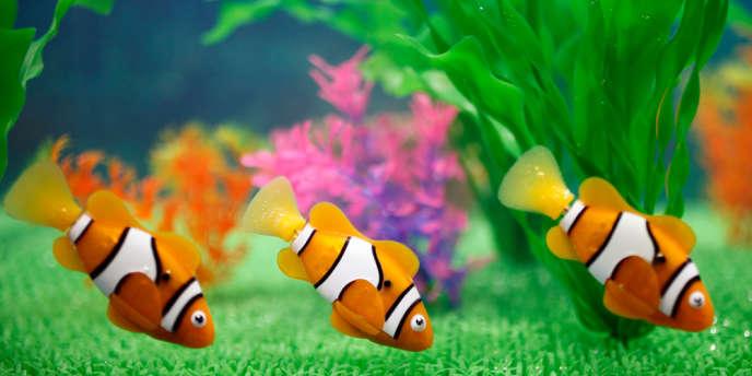 Le Robo Fish est un poisson coloré, doté de piles, qui s'anime une fois plongé dans l'eau.