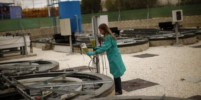 L'usine de production de biofuel à partir d'algues, à Chiclana de la Frontera, dans le sud-ouest de l'Espagne.