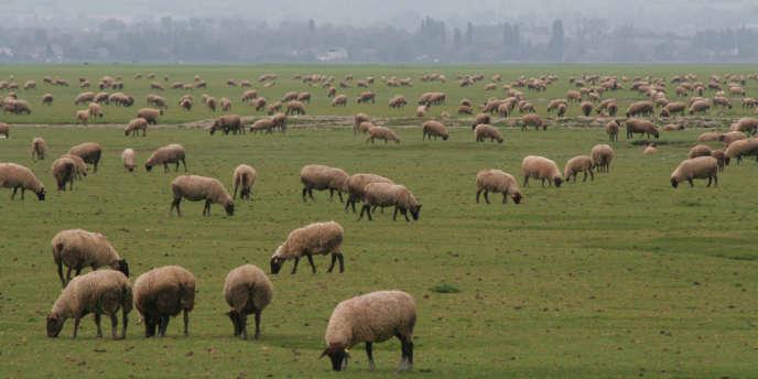 En 2013, les attaques de loups ont fait 6 188 victimes dans les troupeaux.
